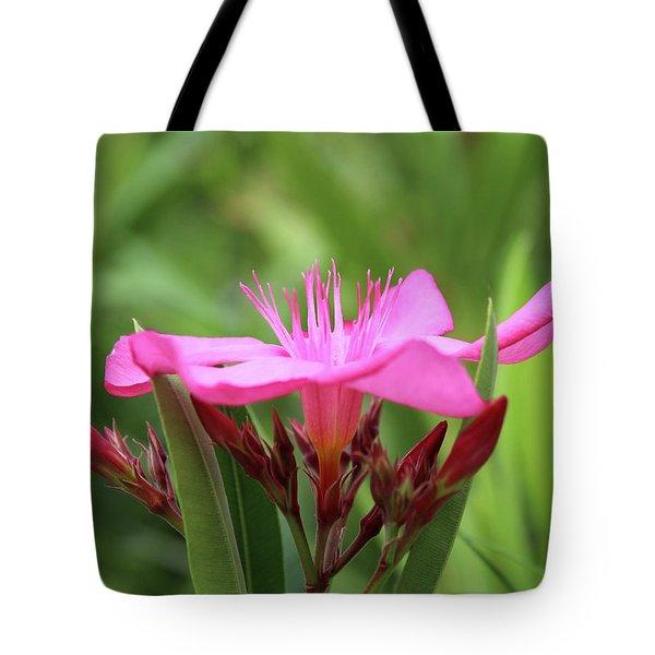 Oleander Professor Parlatore 1 Tote Bag