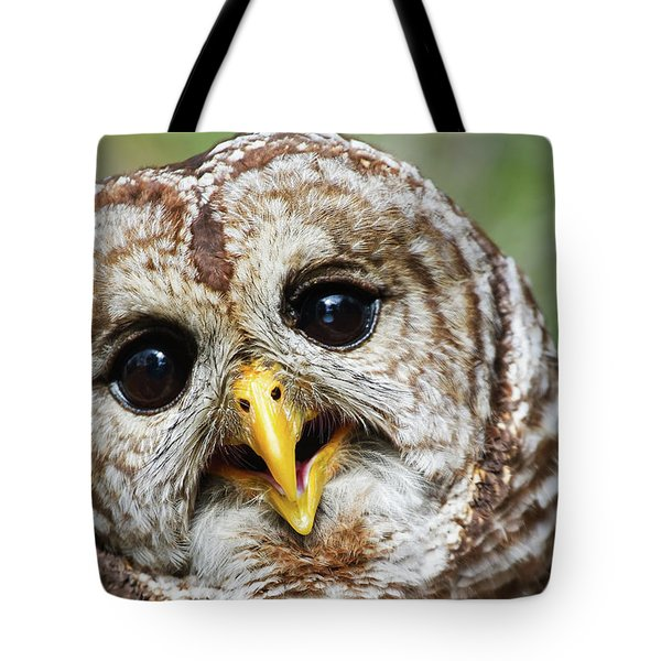 Tote Bag featuring the photograph Oliver Owl by Arthur Dodd