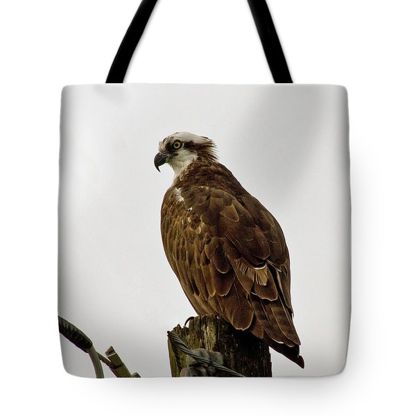 Ollie, The Osprey Tote Bag