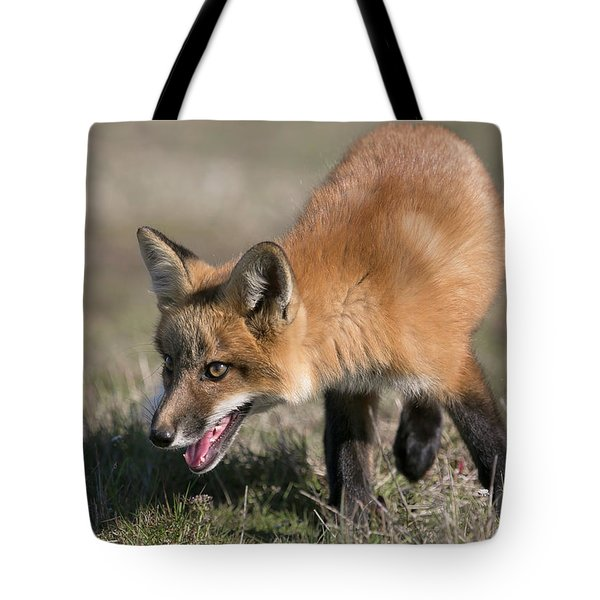 Tote Bag featuring the photograph On The Prowl by Elvira Butler