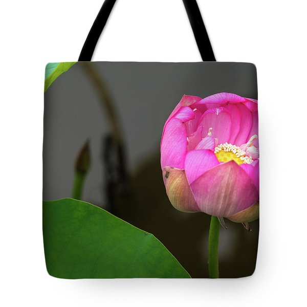 Tote Bag featuring the photograph Opening Lotus Lily by Dennis Dame