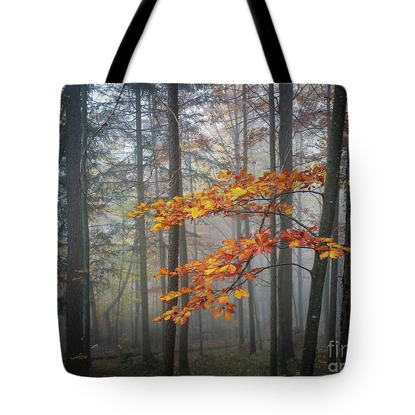 Tote Bag featuring the photograph Orange And Grey by Elena Elisseeva