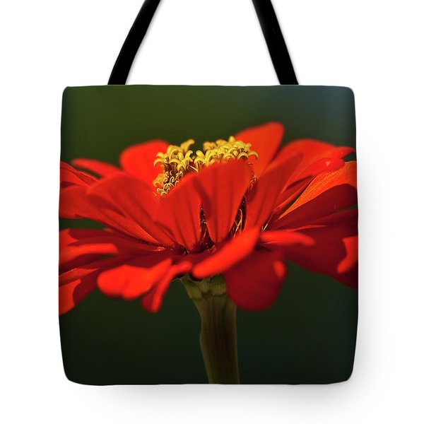 Tote Bag featuring the photograph Orange Aster-a Bee's Eye View by Onyonet  Photo Studios