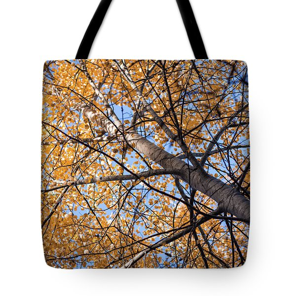 Orange Autumn Tree. Tote Bag by Teemu Tretjakov