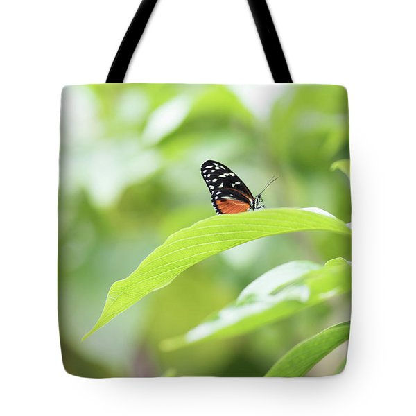 Tote Bag featuring the photograph Orange Black Butterfly by Raphael Lopez