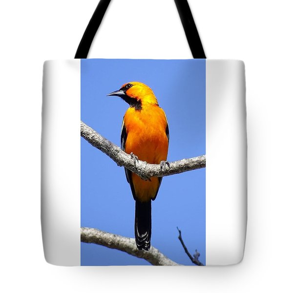 Tote Bag featuring the photograph Orange Breasted by Cindy Charles Ouellette