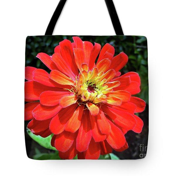 Orange Burst Zinnia Tote Bag by Sue Melvin