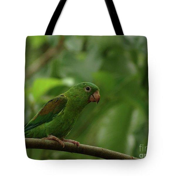 Orange-chinned Parakeet  Tote Bag