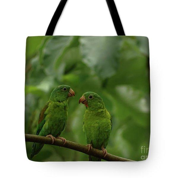 Orange-chinned Parakeets-  Tote Bag