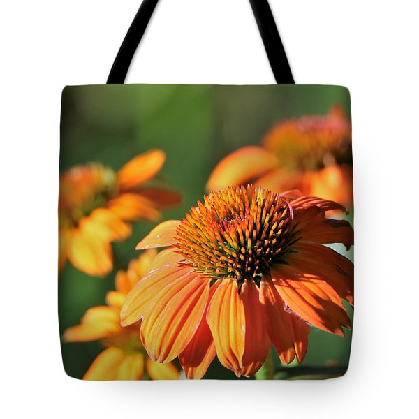 Tote Bag featuring the photograph Orange Cone Flowers In Morning Light by Sheila Brown
