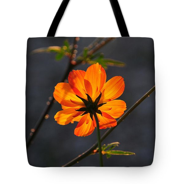 Tote Bag featuring the photograph Orange Cosmo by Susie Rieple