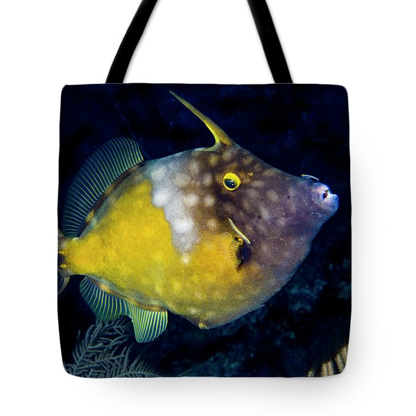 Tote Bag featuring the photograph Orange Filefish by Jean Noren