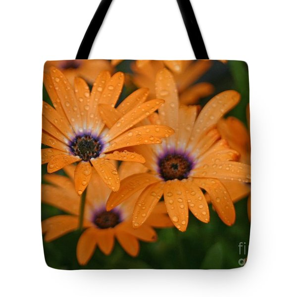 Orange Gazania Tote Bag