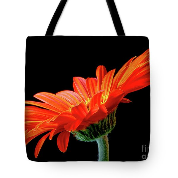 Orange Gerbera On Black Tote Bag