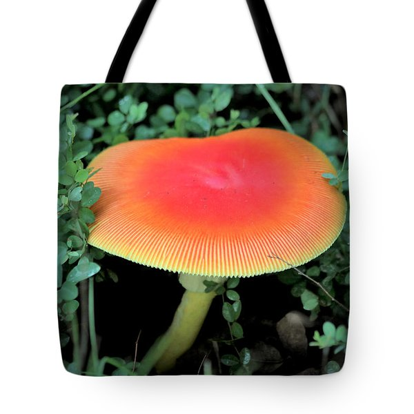 Tote Bag featuring the photograph Orange Glow  by Sheila Brown