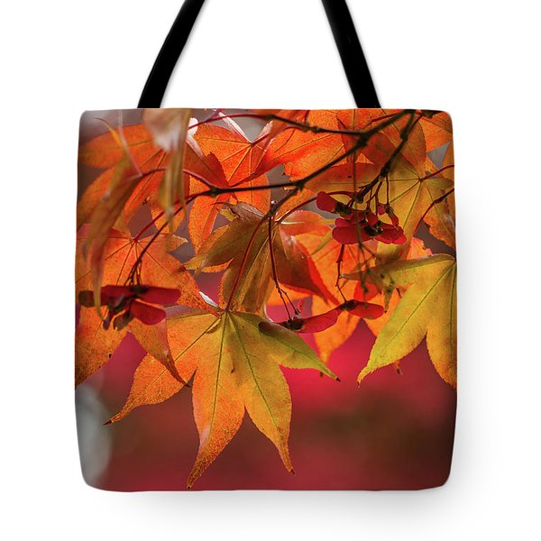 Tote Bag featuring the photograph Orange Maple Leaves by Clare Bambers