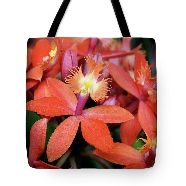Orange Pink Epidendrum Orchid Tote Bag