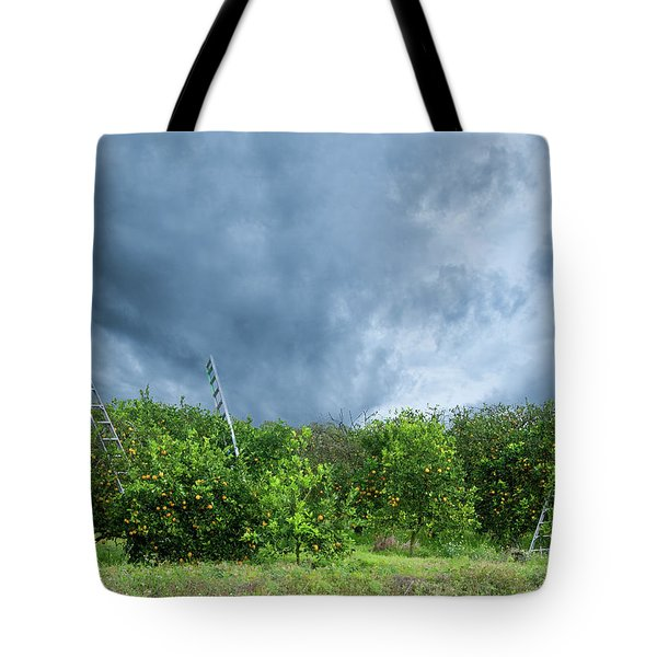 Tote Bag featuring the photograph Orange Tree by Carolyn Dalessandro