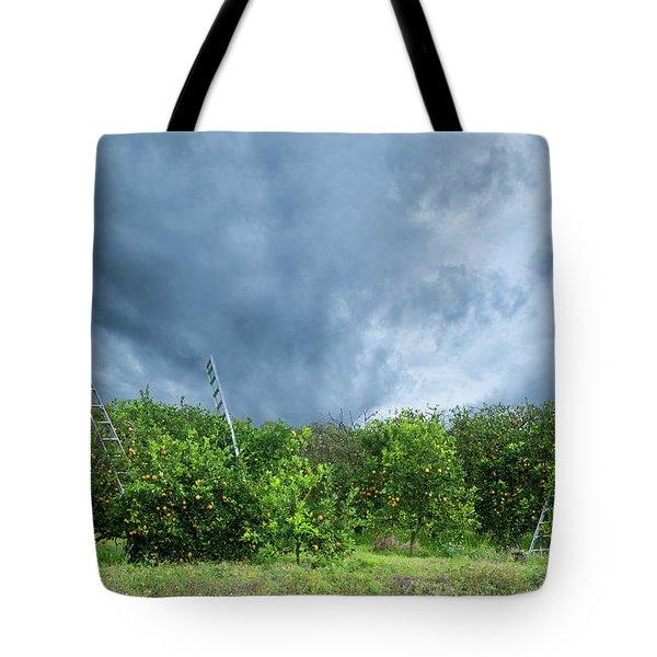 Orange Tree Tote Bag by Carolyn Dalessandro