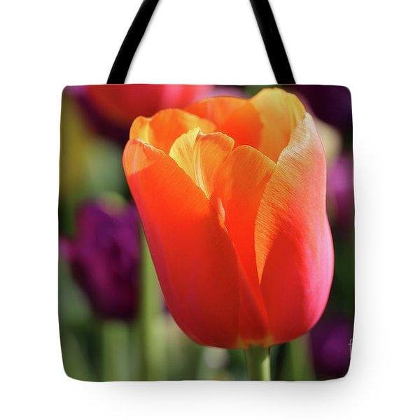Orange Tulip In Franklin Park Tote Bag