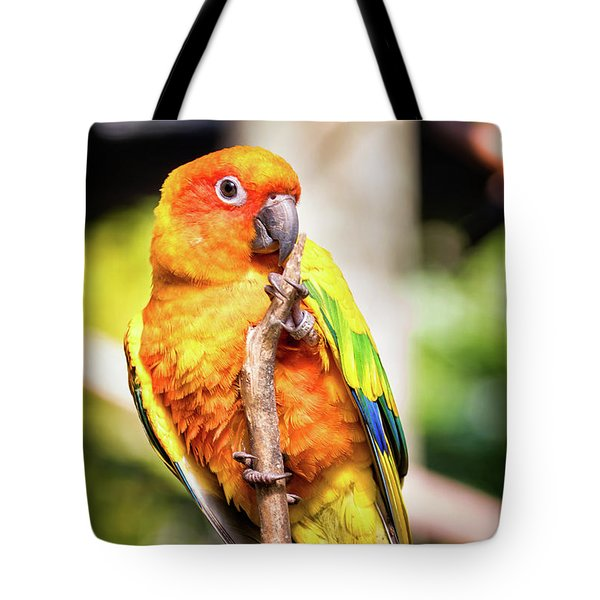 Orange Yellow Parakeet Tote Bag by Stephanie Hayes