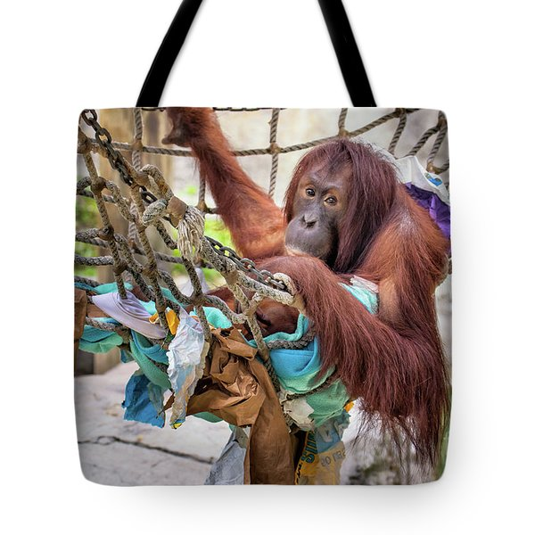 Orangutan In Rope Net Tote Bag by Stephanie Hayes