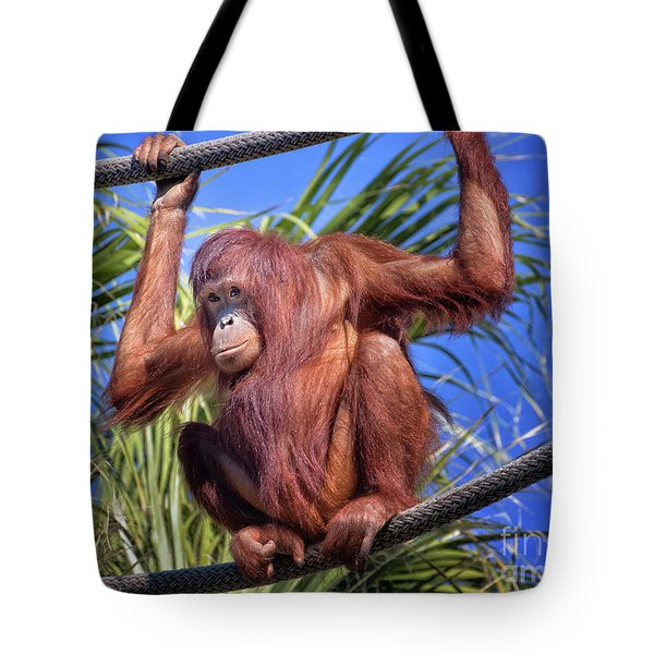 Orangutan On Ropes Tote Bag by Stephanie Hayes