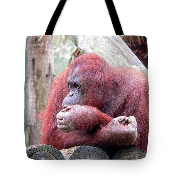 Orangutang Contemplating Tote Bag