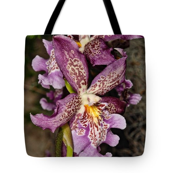 Orchid 347 Tote Bag