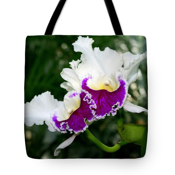 Orchid 6 Tote Bag by Marty Koch