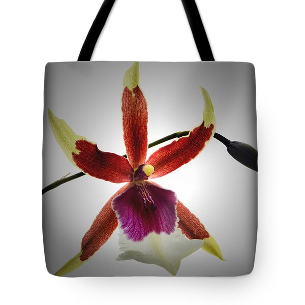 Orchid Cambria. Tote Bag by Terence Davis