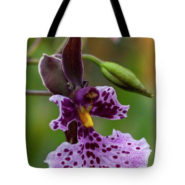 Orchid - Caucaea Rhodosticta Tote Bag