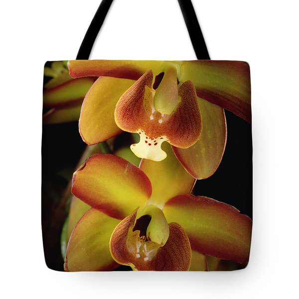 Orchid Eriopsis Sceptrum, Sipapo Tepui Tote Bag by Mark Moffett