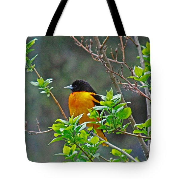 Oriole On The Lilac Tote Bag by Larry Capra