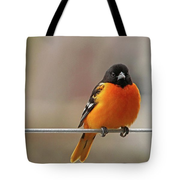 Oriole On The Line Tote Bag