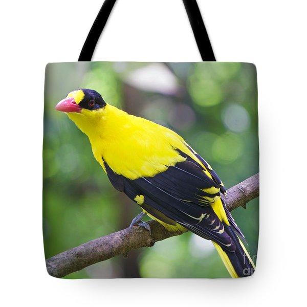 Oriole Wonder Tote Bag