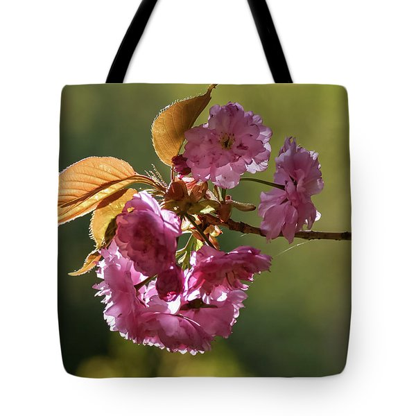 Ornamental Cherry Blossoms - Tote Bag