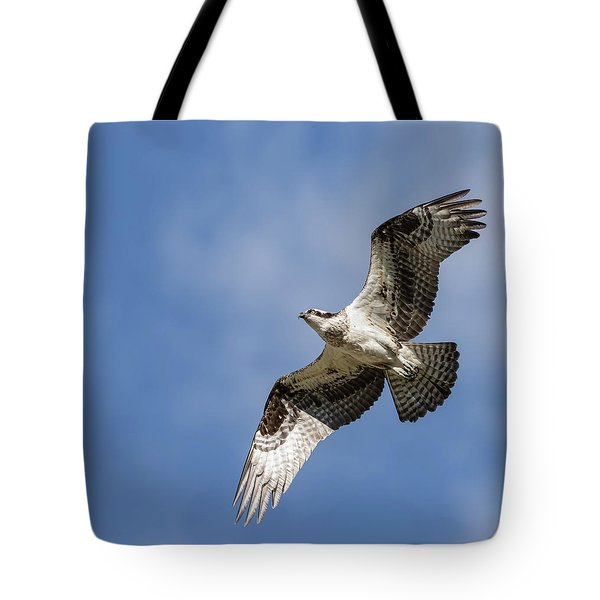 Tote Bag featuring the photograph Osprey 2017-3 by Thomas Young
