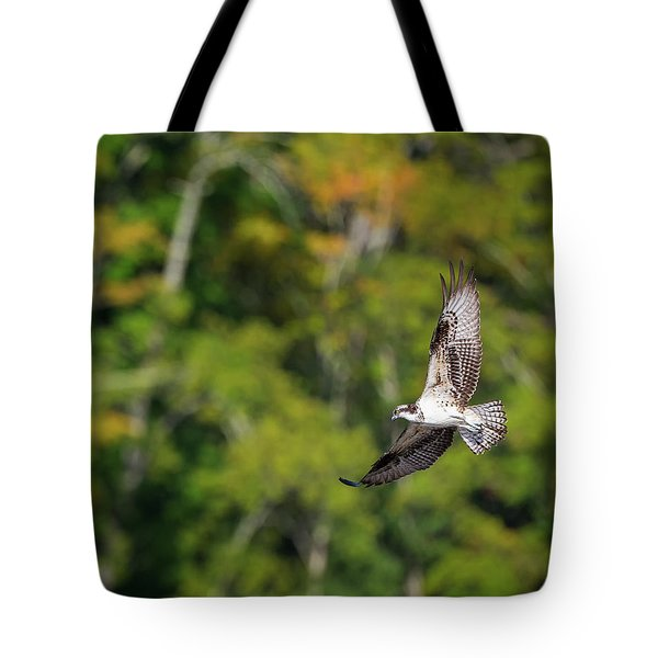 Osprey Tote Bag by Bill Wakeley
