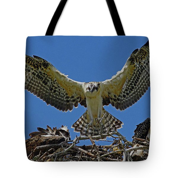 Osprey Chick Ready To Fledge Tote Bag by Larry Nieland