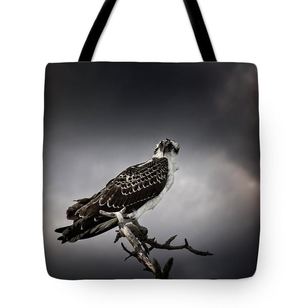 Osprey Tote Bag by Chrystal Mimbs
