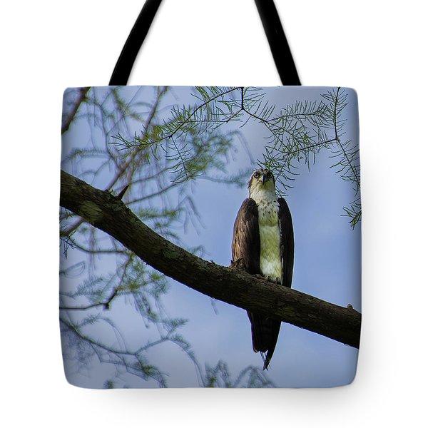 Osprey Tote Bag