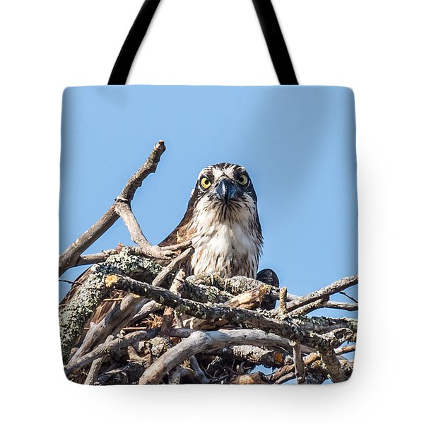 Osprey Eyes Tote Bag by Paul Freidlund