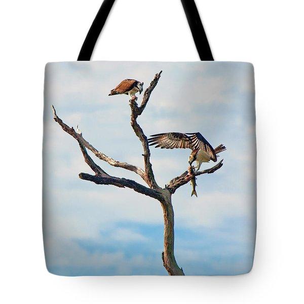 Osprey Feast Tote Bag
