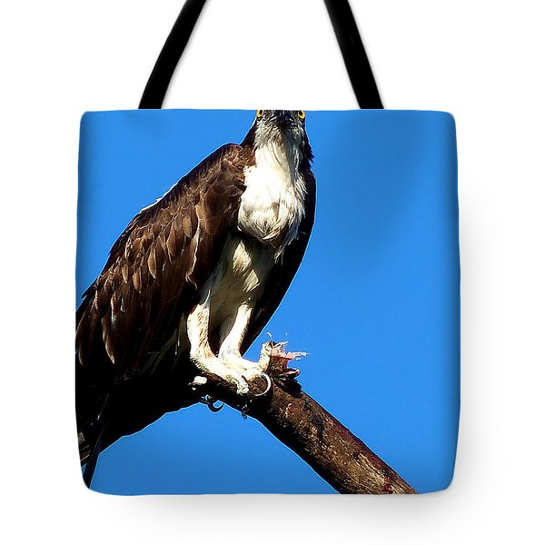 Tote Bag featuring the photograph Osprey Feeding 005 by Chris Mercer