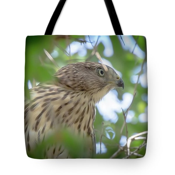 Red-shouldered Hawk Fledgling 1 Tote Bag