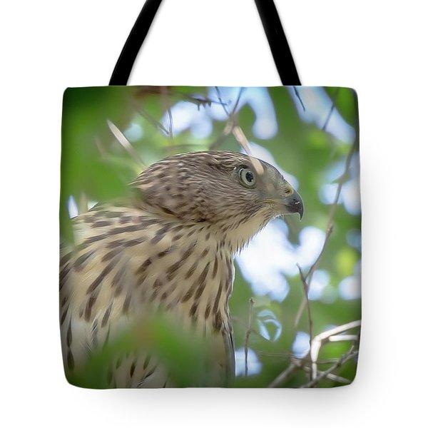 Red-shouldered Hawk Fledgling 1 Tote Bag