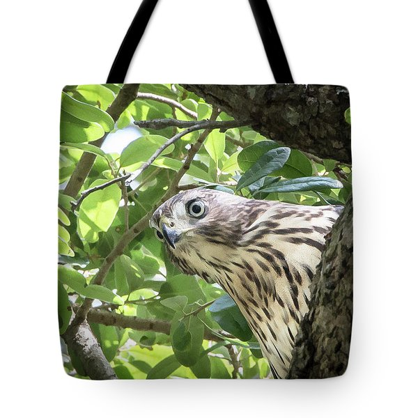 Red-shouldered Hawk Fledgling - 5 Tote Bag