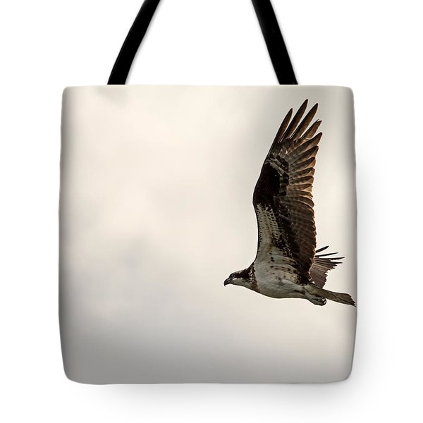 Osprey Fly By Tote Bag