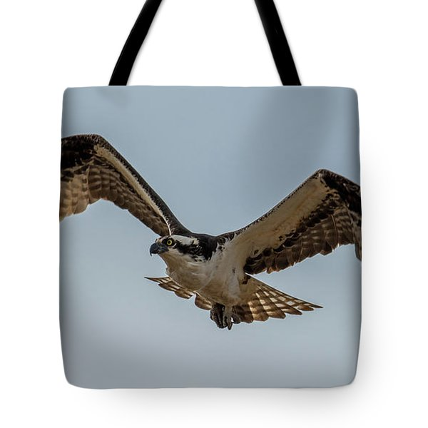 Osprey Flying Tote Bag by Paul Freidlund